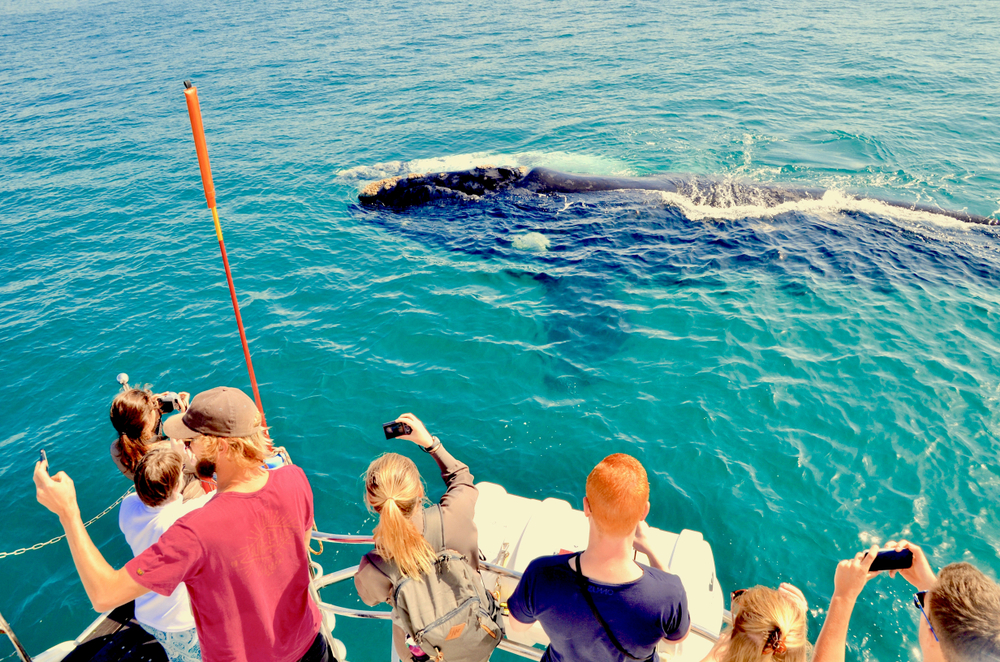 Top 13 beautiful places to visit in Los Angeles - Year round Whale watching Cruise