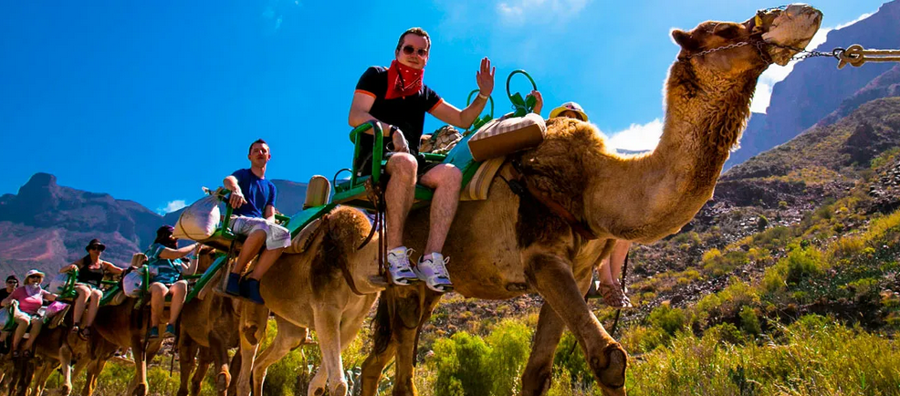 Camel Riding in Gran Canaria