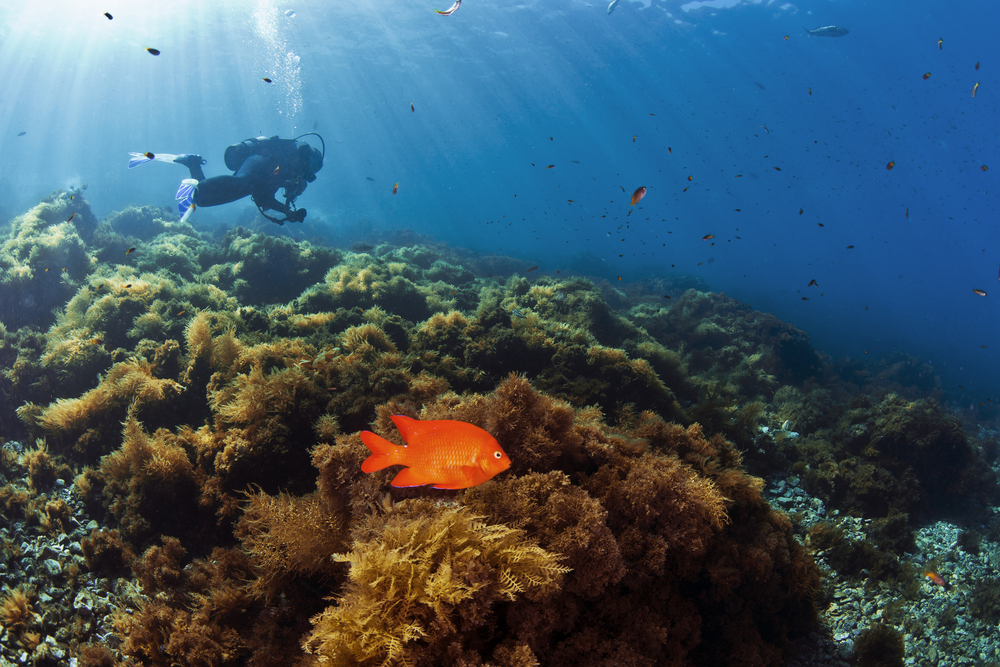 Snorkeling and scuba diving in Catalina