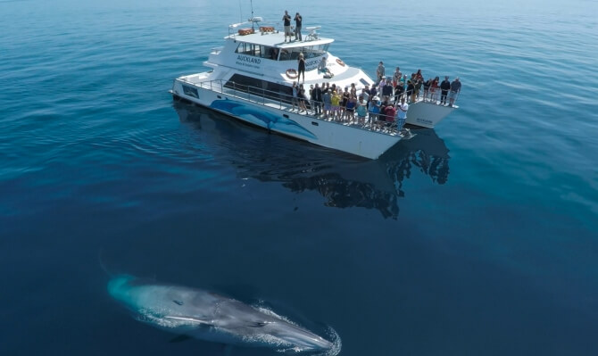 Take Auckland Dolphin and Whale watching cruise