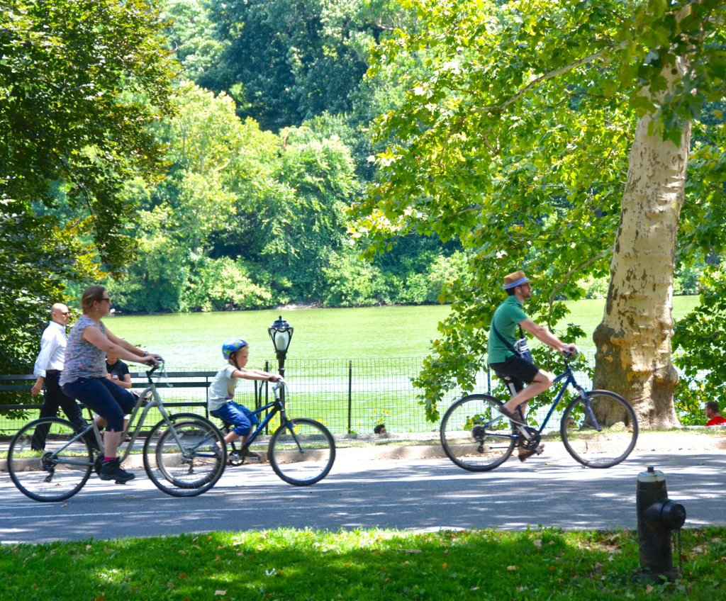 Enjoy nature while riding a bicycle through the park