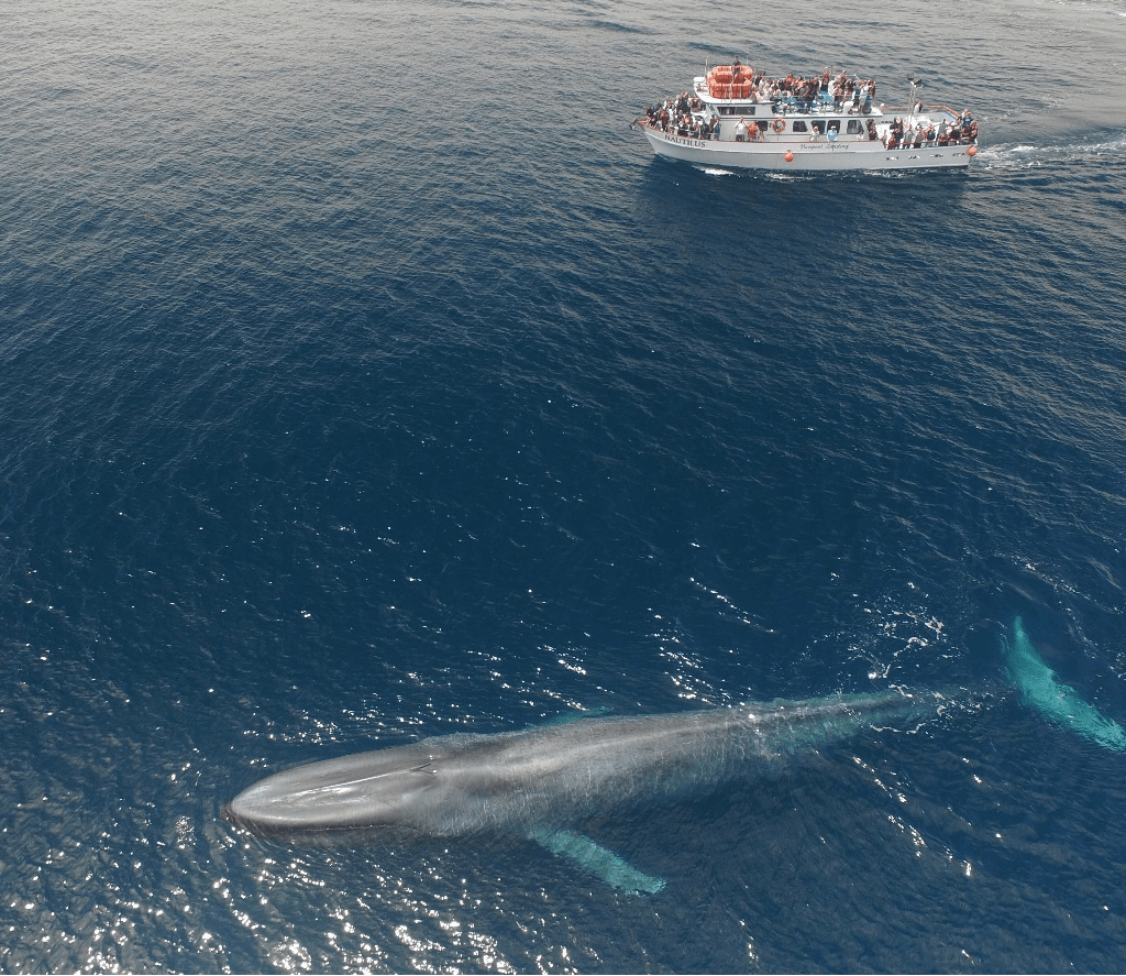 2. Whale Watching Cruise from Newport :